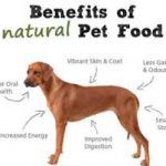 benefits of dog food
