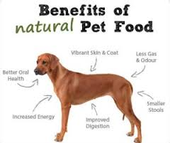 natural dog food benefits