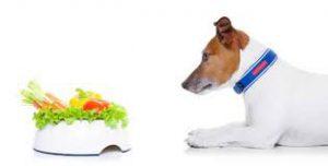 dog looking at healthy food