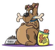 fat dog with bone