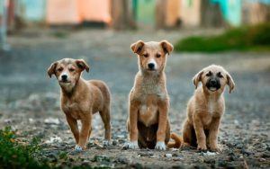 Canidae dog food - dogs