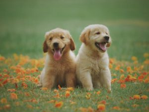 two pups