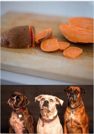 Sweet Potato In Dog Treats - Sweet Potatoes And Dogs