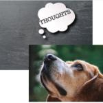 Nature's Recipe Dog Food - Dog thinking