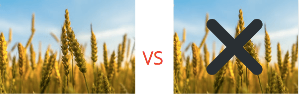 Dog Food With Grain - Grain vs Grain Free